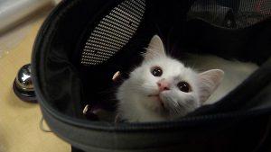Cat Trap King