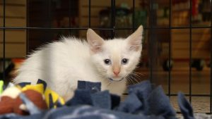 The Animal Humane Society says it's the busy time of the year, with kittens and puppies coming up from adoption.