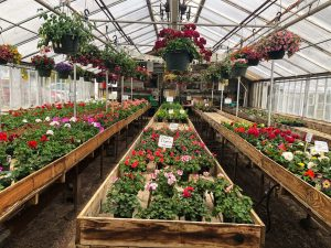 Brooklyn Center Greenhouse