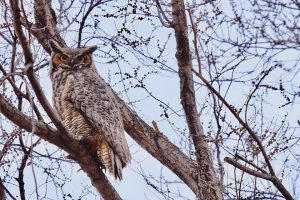 palmer lake owls