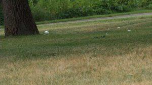 Volunteers clean up parks