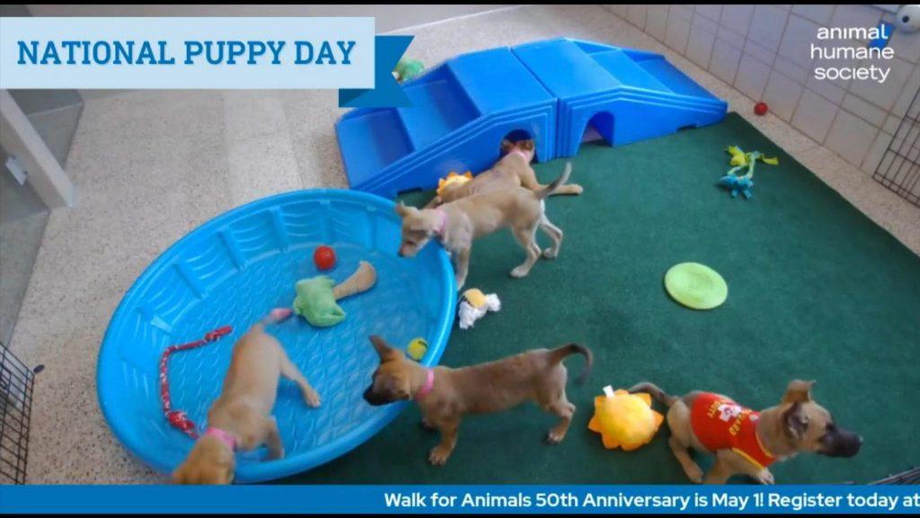 animal humane society puppies